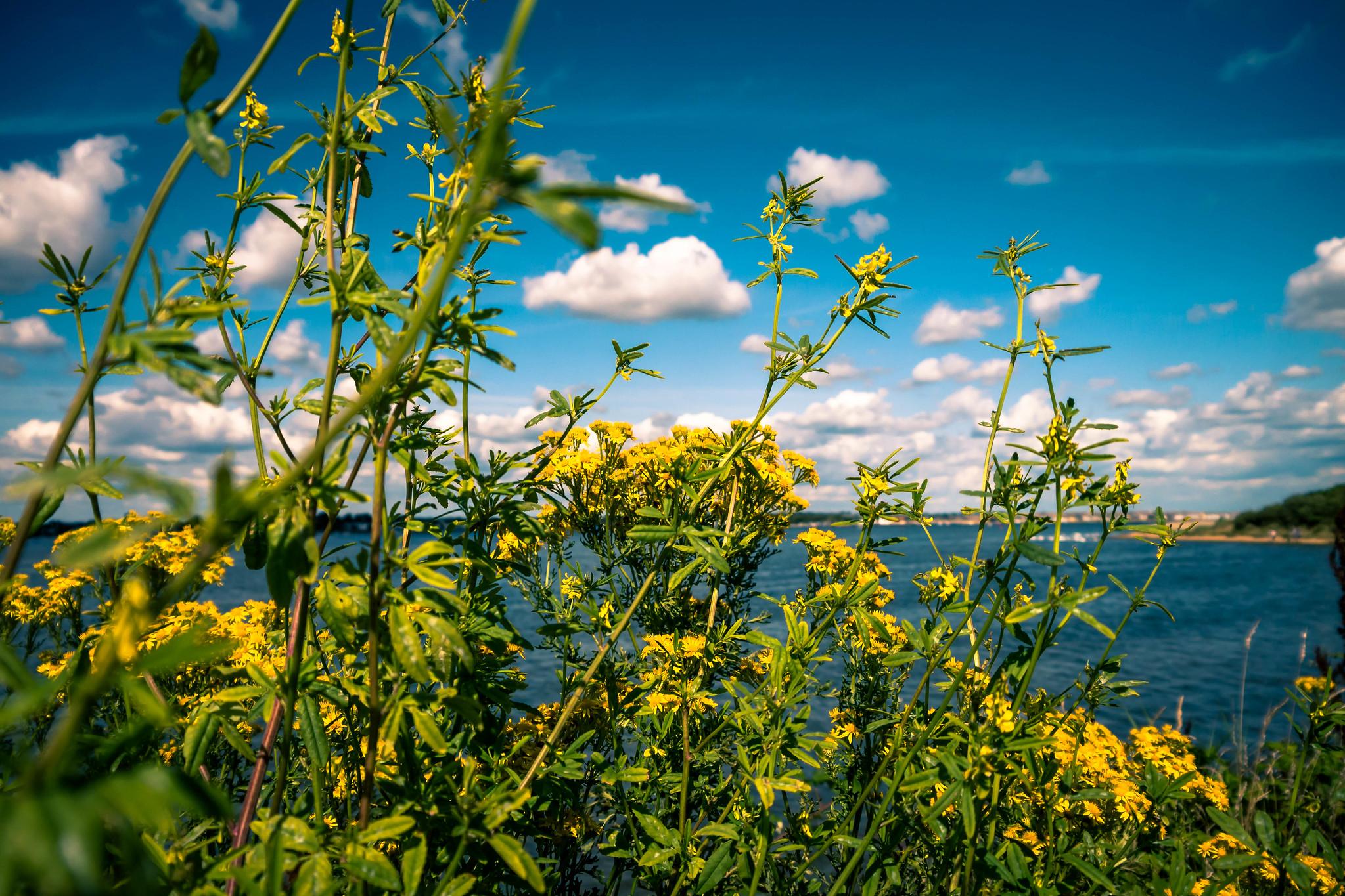 Weekend Wild Flowers