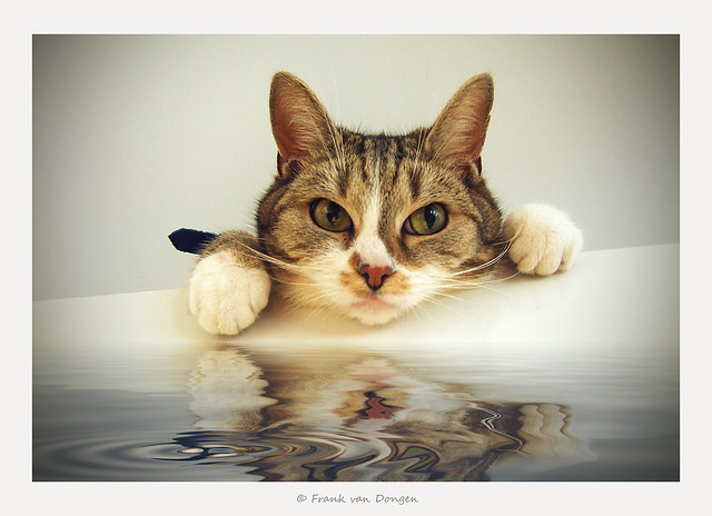 our cat Dirk loves water........not !