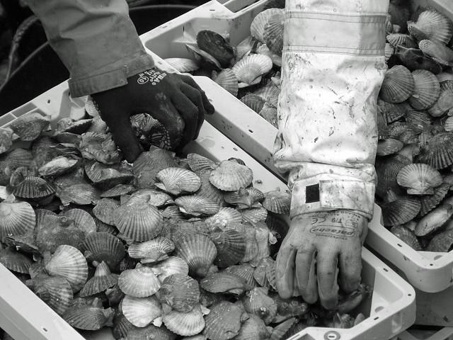 Marisqueiros en la lonja (Foto en blanco y negro)