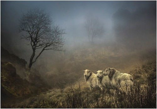 Bleak Grazers | by AJ Scapes