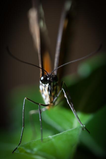 Butterfly Palace 8127