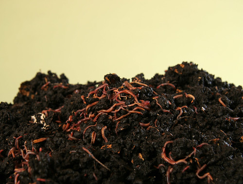 Compost with earthworms | by Sustainable sanitation