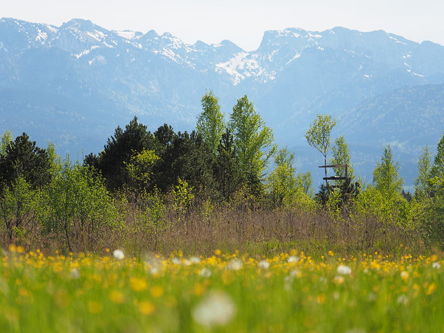 Blumenwiese Frühling Sommer Bayern Oberbayern - Wild Flower Meadow Upper Bavaria Germany