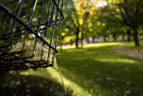 Leaf Resting in Basket