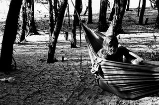 From the hammock