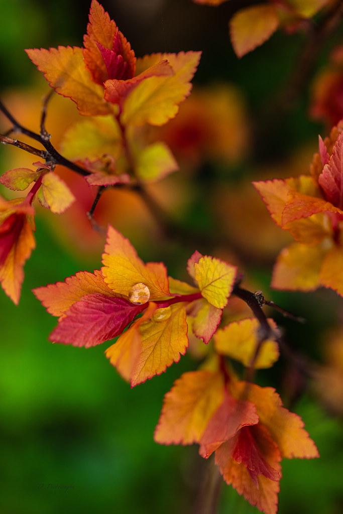 Magic leaves ...