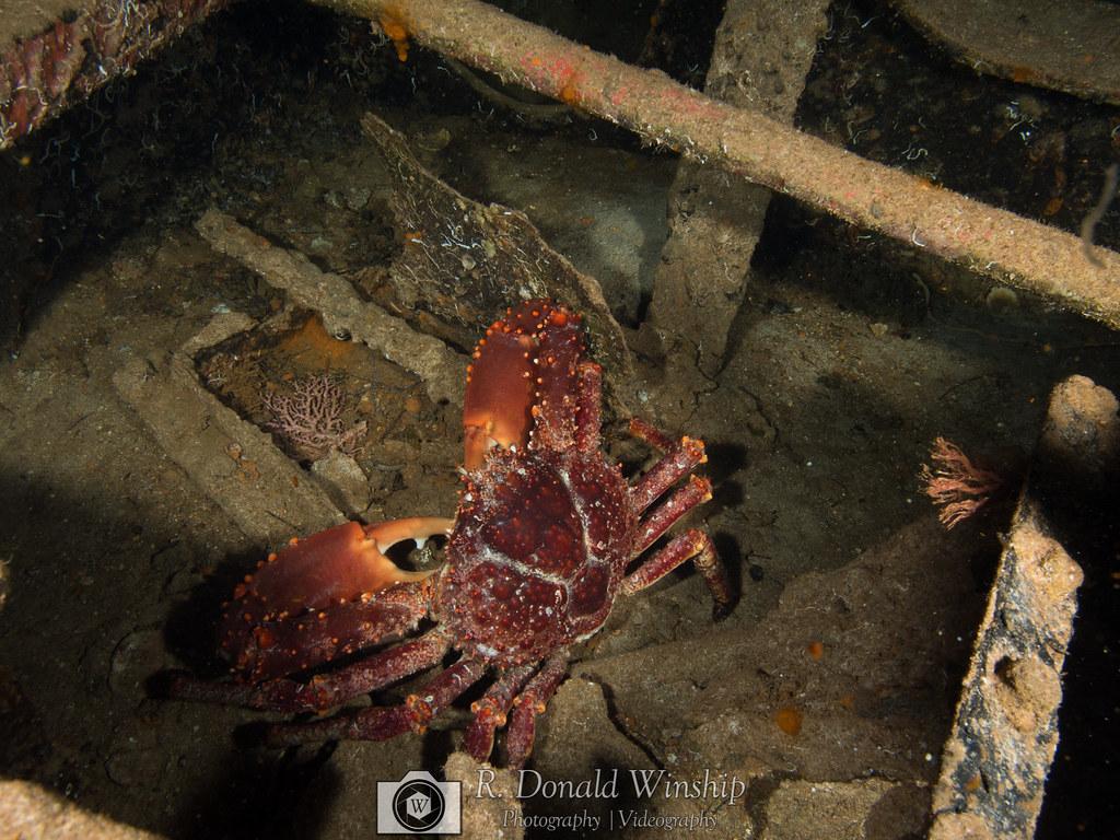 Crab | Cozumel, 2018 | R  Donald Winship | Flickr
