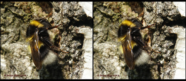 Bee resting on tree - 3d cross-view