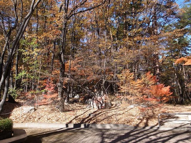<p>c)紅葉の盛りは過ぎたようですが、それでもまだ、きれいな景色が広がります。</p>
