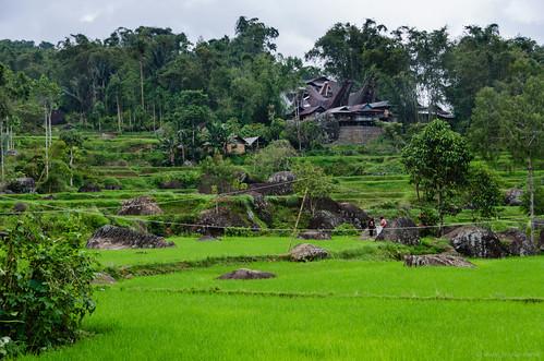 Paddies and Toraja houses | by Jerome Nicolas