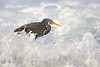 Reef Egret in the surf by beninfreo