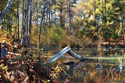 lake tree nature landscape nikon d3000