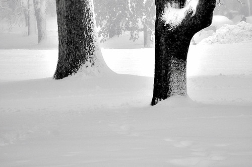 The Black and White Majesty of Winter | by Madison Guy