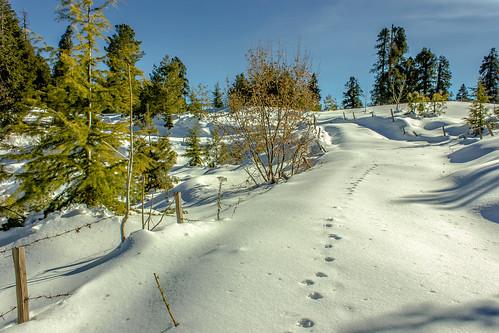 snow trekking paths pakistan excellentlandscapes colorsofnature mountains travel asia southasia inspiringtravel vacation forest nationalpark travelerphoto ultimateshot walk myperspective experimentalphotos lightroom