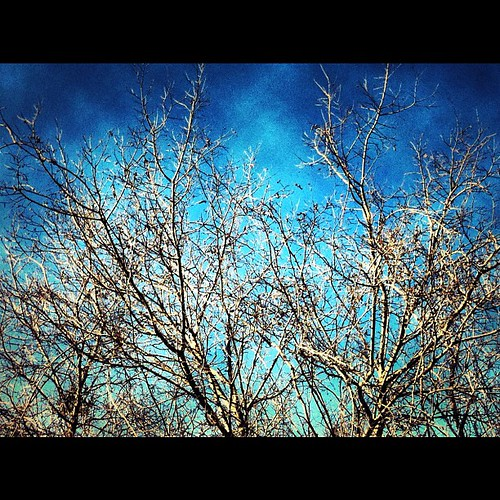 blue sky tree nature outdoor branches iphone4 iphoneography uploaded:by=flickstagram instagram:photo=6416525563722690