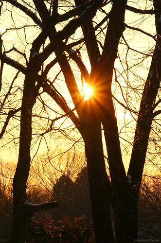 trees sunset sun silhouette sunburst starburst gypsymarestudios jennifermacneilltraylor jmacneilltraylor