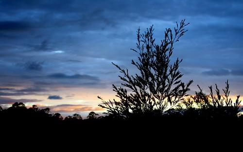 sunset sky sillouette glenugie