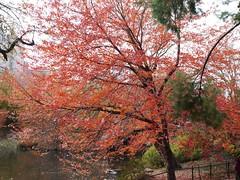 日, 2012-11-18 14:40 - Central Parkの紅葉