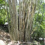 Lucia en el Norte de Tailandia, Viajefilos 062
