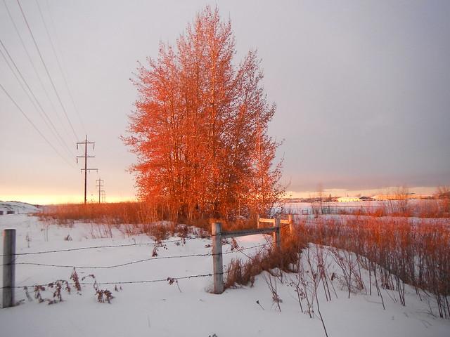 Winter Sunrise on Prairies Series