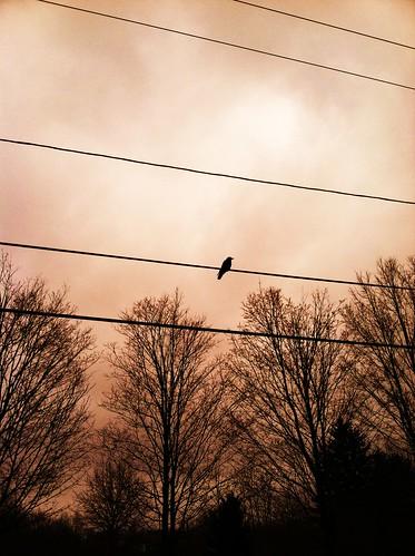 trees winter sky birds mood wires leonardcohen