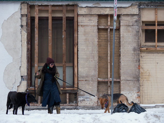 January 2: Renovations, with dogs