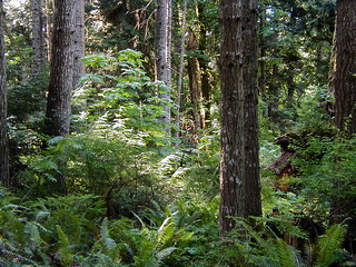 P1013776 Typical Coastal Temperate Rain Forest | by In Loving Memory Bluebear & Lani