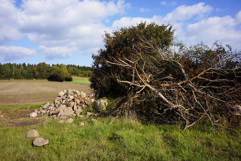 Omkring-Kaedeby-oktober-2015 (12)