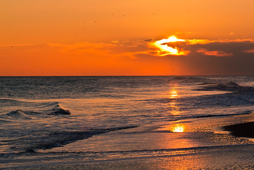 thanksgiving sunset bird beach pelicans birds sunrise northcarolina pelican emeraldisle