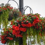 Kent, UK - A flower basket at Westerham