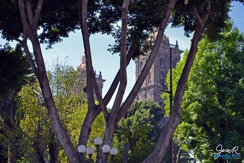 20121227_catedraltrasarboles