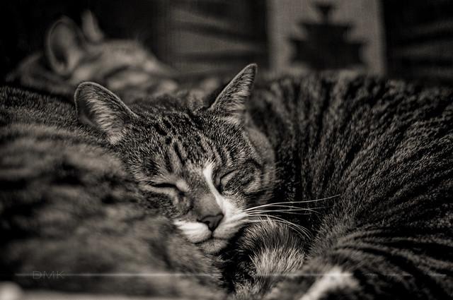 Two Sleepy Kitties