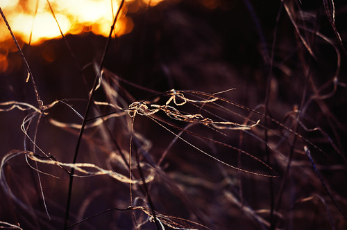 winter light sunset plant grass reeds golden leaf nikon warm wind illumination windy blow marsh breeze brianeno goldenhour henrydavidthoreau 50mmf18 blowinginthewind thisthing nikond90 exposure4