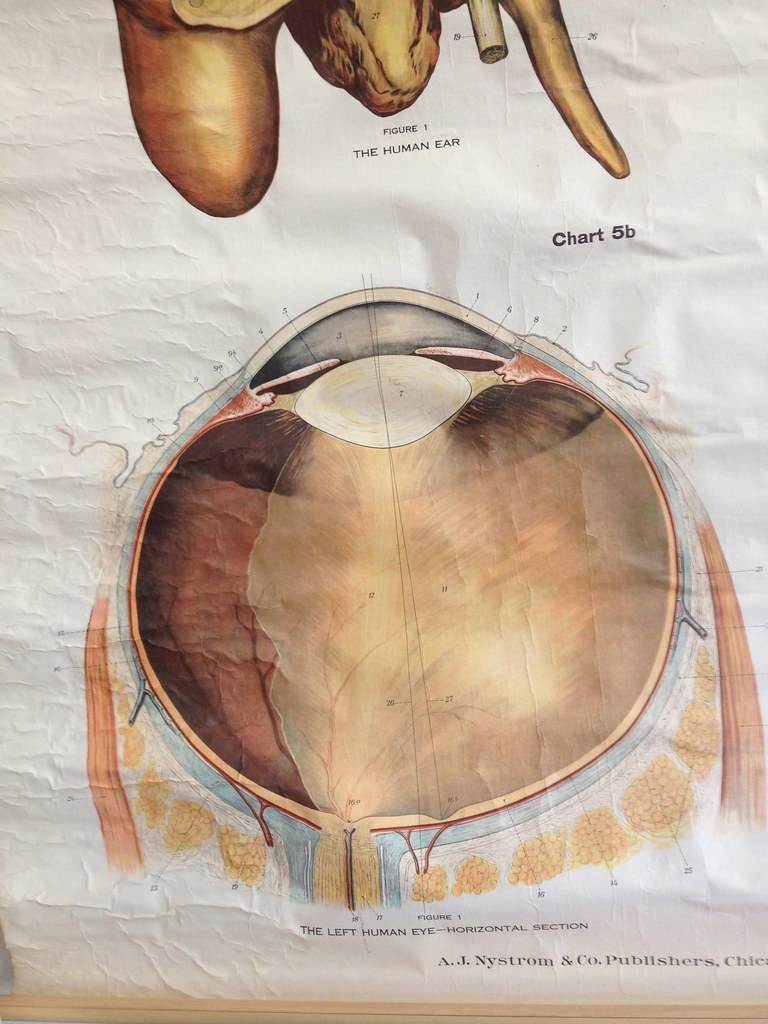 Vintage Biology Posters | I found 78 of these vintage (1910