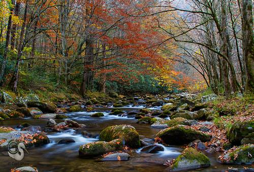 autumn fall tn tennessee fallcolors smokies greatsmokymountains canon7d tremontriver endlessreach1 carlsshaw carlshawphotography