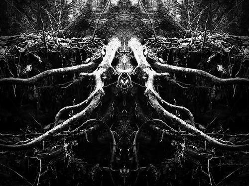 winter tree nature dark january roots creepy spooky mirrorimage root exposed darkart gypsymarestudios jennifermacneilltraylor jmacneilltraylor
