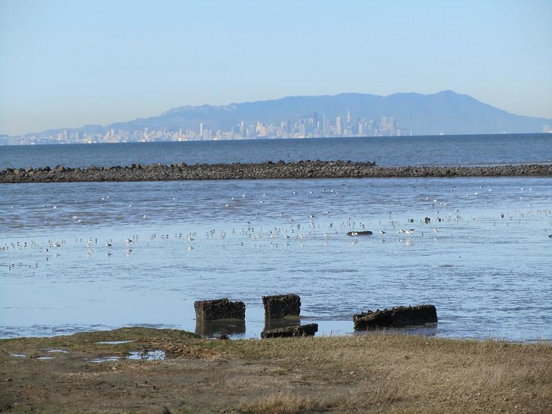 Hayward Shoreline