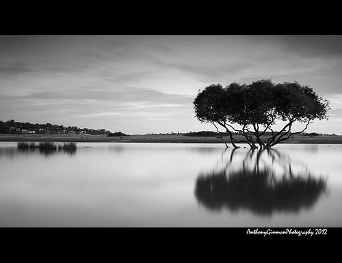 longexposure bw mangrove bonnievale theroyalnationalpark bwnd110
