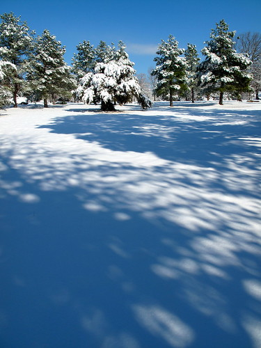 trees snow landscape december arkansas