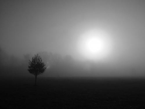 white mist black fog sunrise