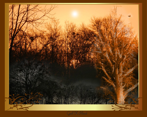 trees light sun bronze photoshop golden soe thegalaxy flickraward theperfectphotographer thebestofday gailpiland ringexcellence rememberthatmomentlevel1 rememberthatmomentl1