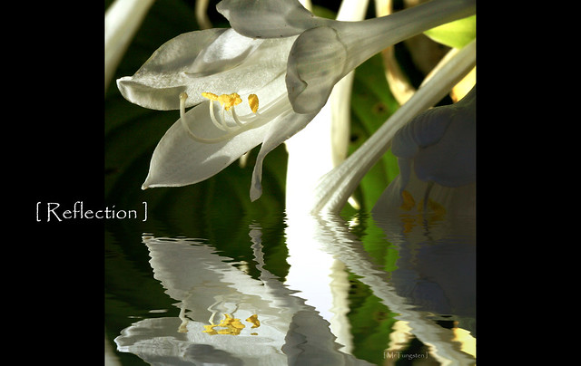 [ reflection ]