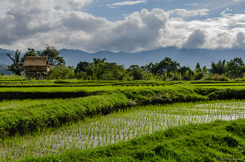Pilotis house on rice paddy field | by Jerome Nicolas