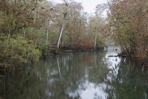 nature florida wildlife suwanneeriver manateespringsstatepark gseloff