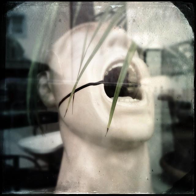 Head in a window