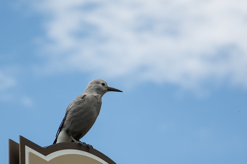 Bird | by cesareb