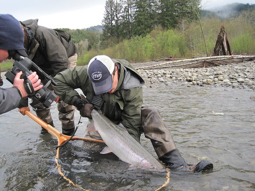 Thick Steelhead from the Bogachiel | by Maine River Guides
