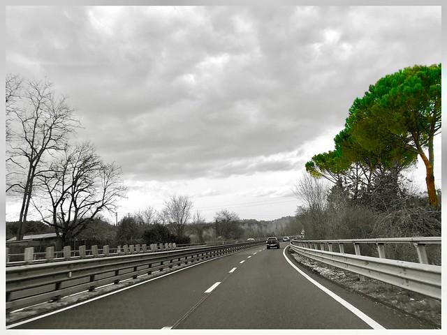 Il pino della superstrada - The highway pine