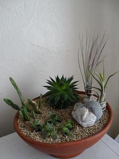 Desert Garden | by stephanellidesigns