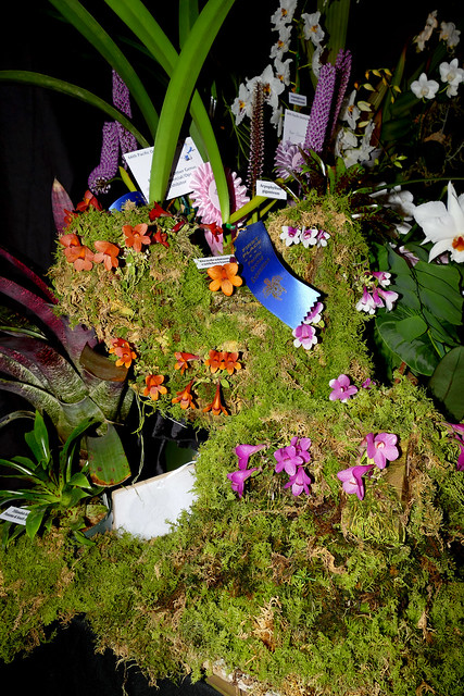 the 2018 pacific orchid exposition: exhibit display